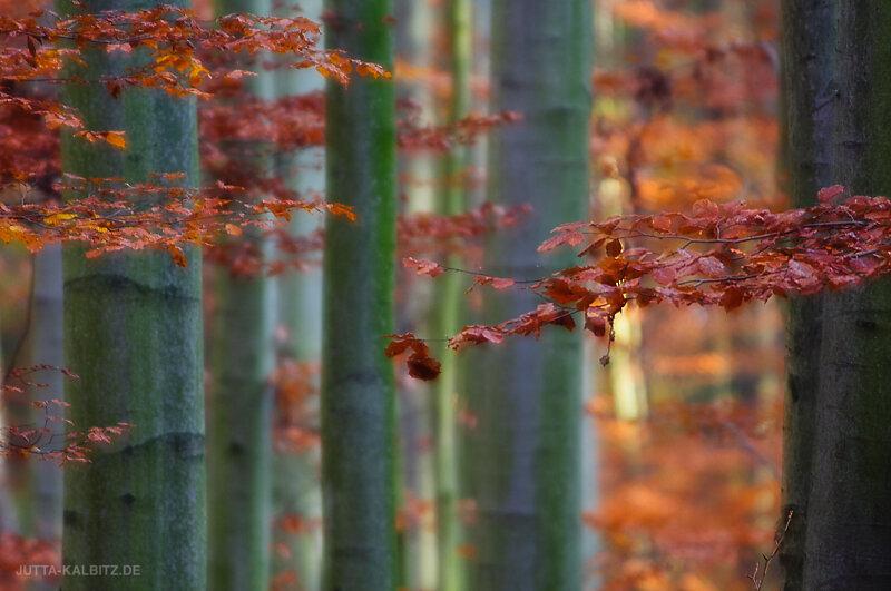 Herbst-3.jpg