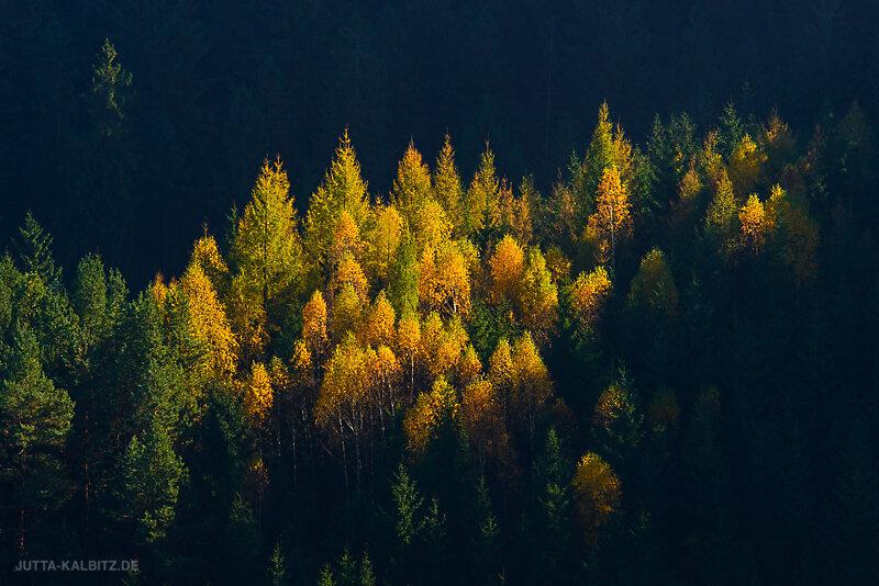 Herbst-5.jpg