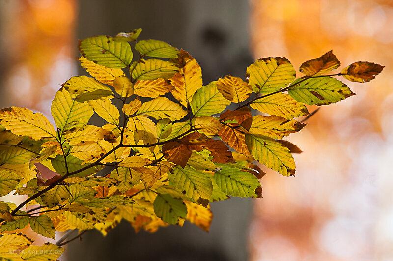 Herbst-2.jpg