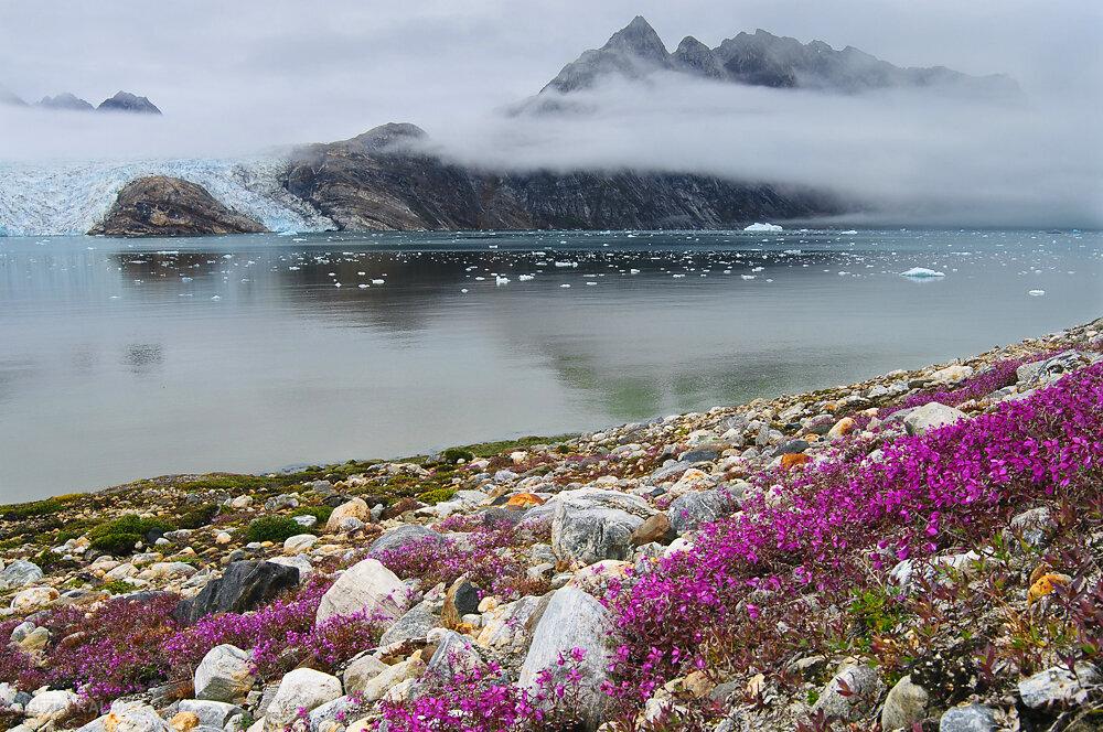 Hochsommer am Karale Gletscher - Ostgrönland