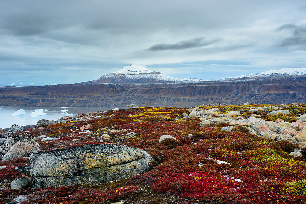 Charcot Havn - Nationalpark Grönland