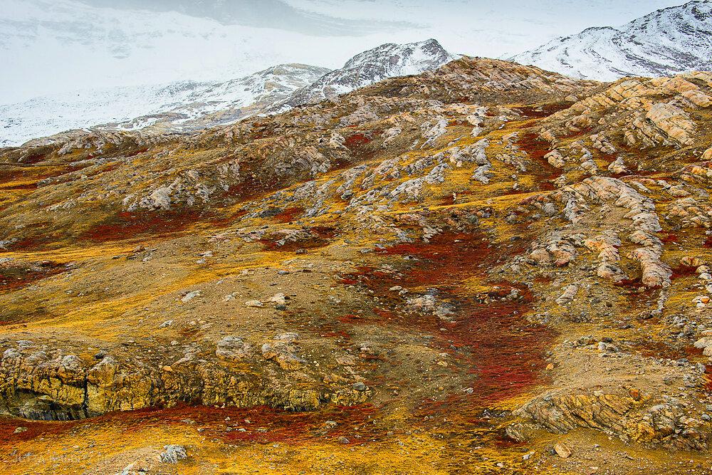 Blomster Bugden - Nationalpark Grönland