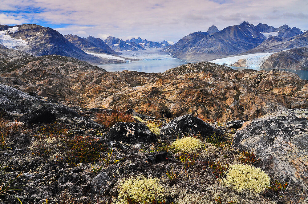 Arktischer Sommer - Karale Gletscher  - Ostgrönland