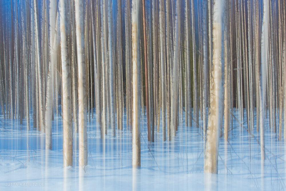 Winterbirken - Karelien (Wischtechnik)