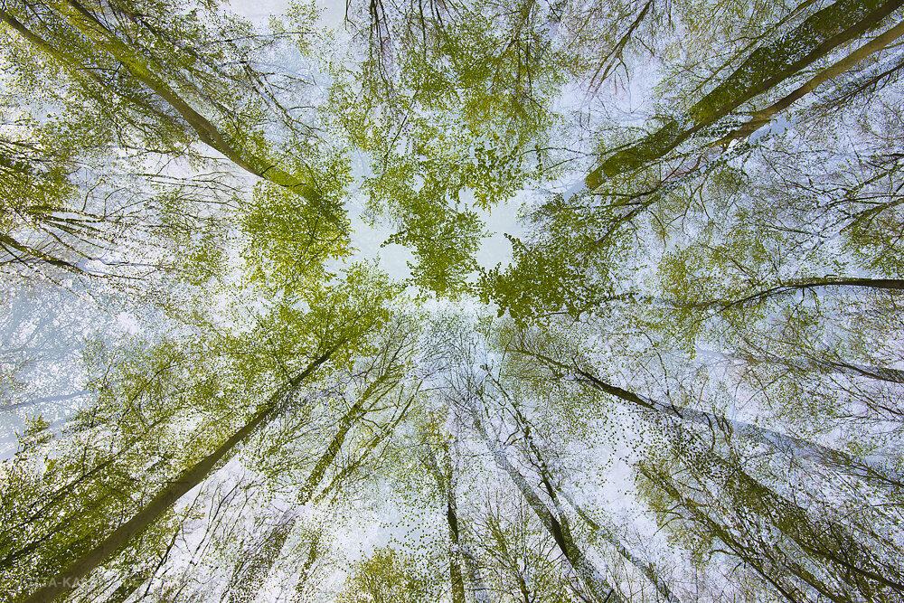 Frühlingsimpression (kamerainterne Mehrfachbelichtung)