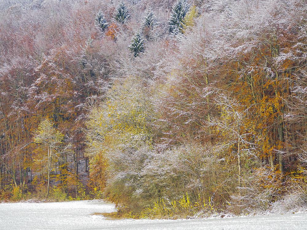 winterbaum-2.JPG