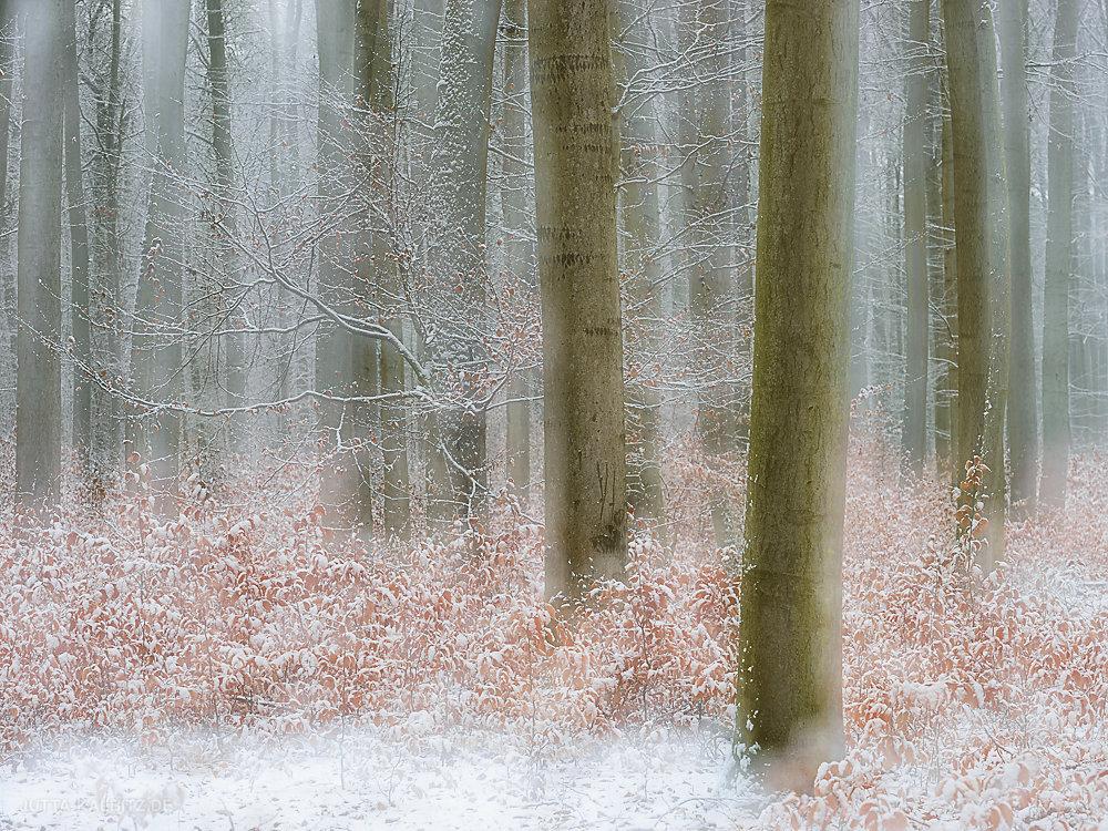 winterbaum-12.JPG