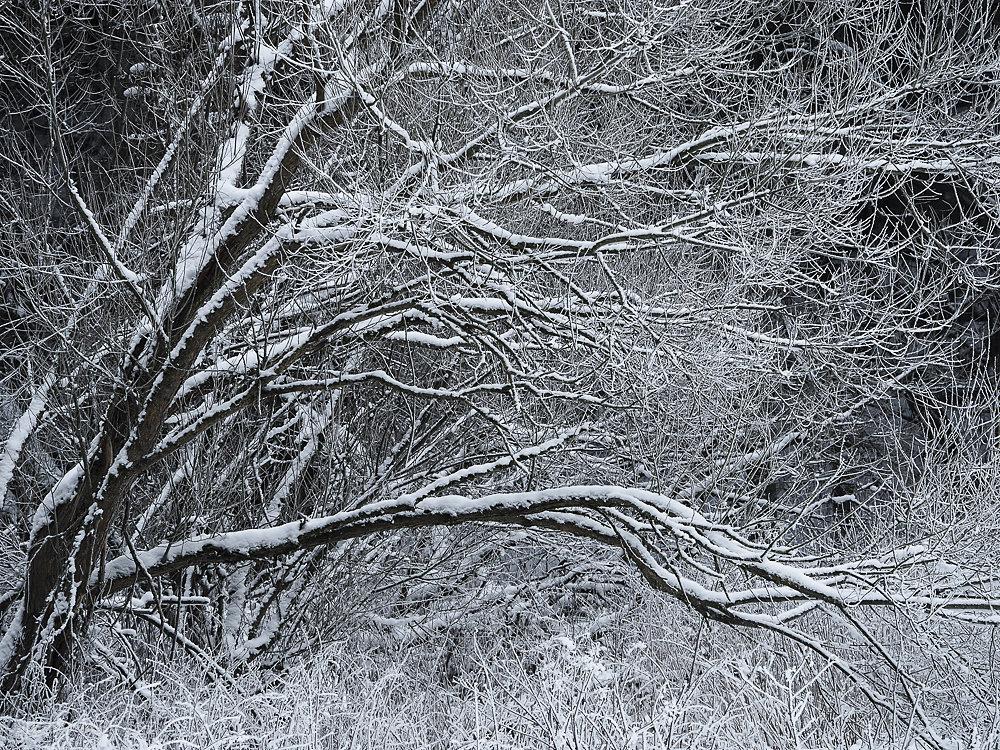 winterbaum-14.JPG