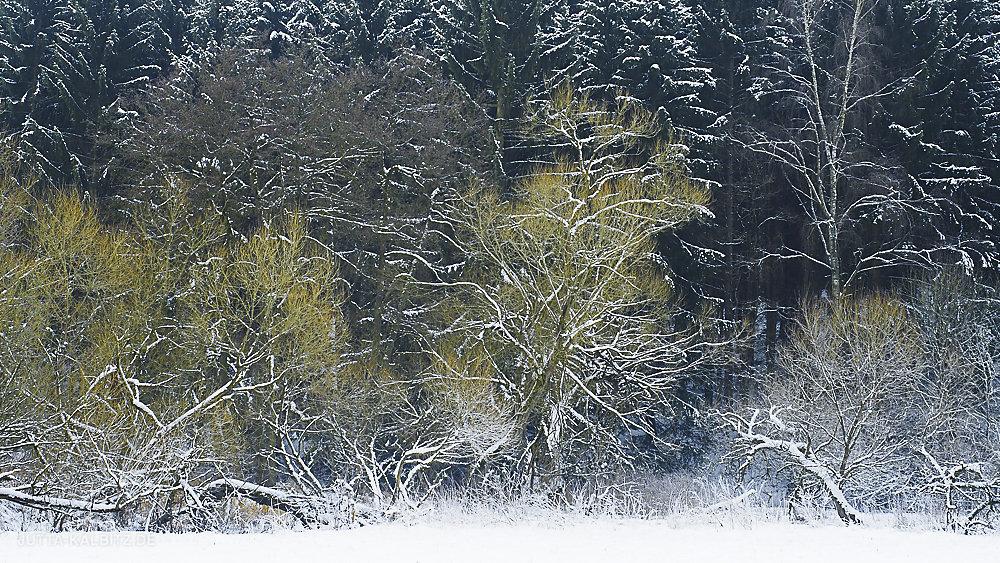 winterbaum-17.JPG