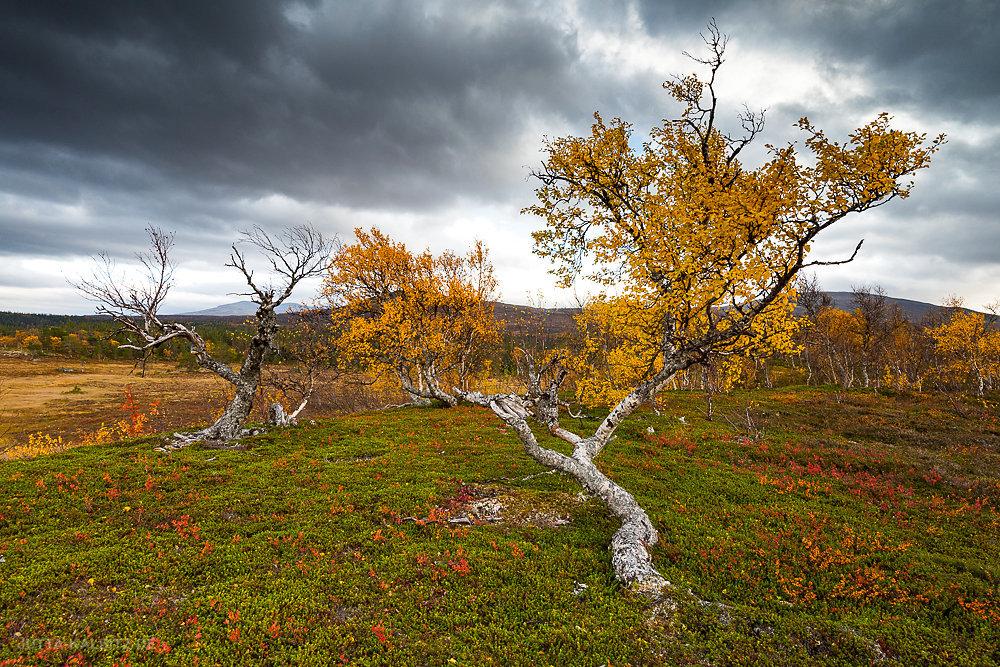 Jämtland-Fjäll