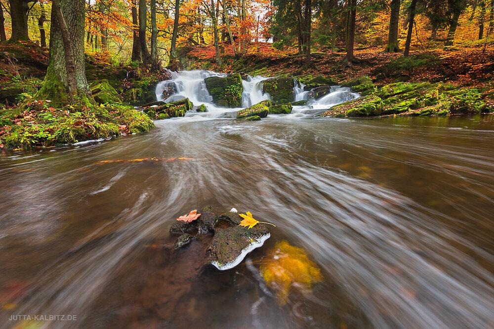 Herbst an der Selke - Harz