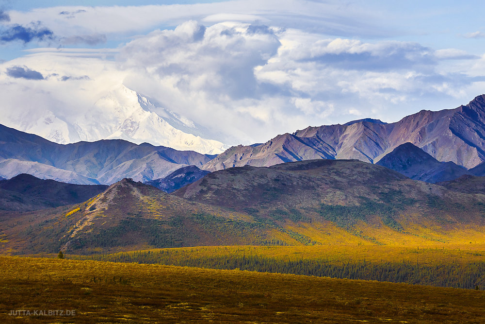 Im Denali Nationalpark
