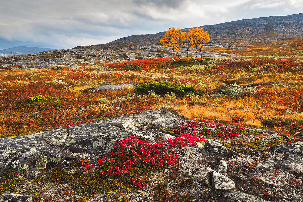 September im Saltfjell